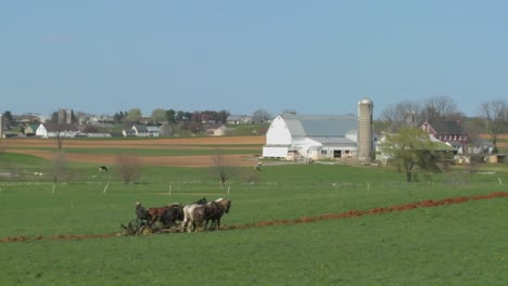 An-amish-farmer-uses-horses-to-plow-his-fields-1