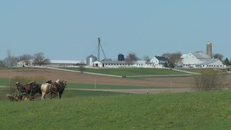 An-amish-farmer-uses-horses-to-plow-his-fields-2