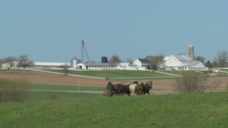 An-amish-farmer-uses-horses-to-plow-his-fields-3