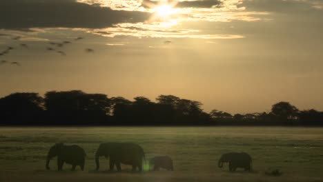Clouds-and-the-sun-move-in-time-lapse-over-a-herd-of-elephants-on-the-African-savannah