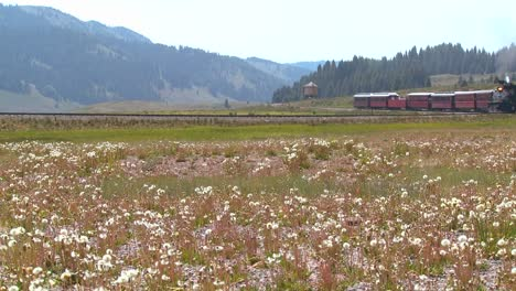 A-steam-train-passes-through-fields-in-the-Rocky-Mountains