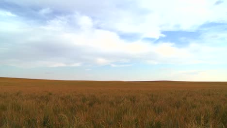 Vast-open-plains-stretch-out-to-the-horizon