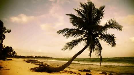 Paradise-Palms3