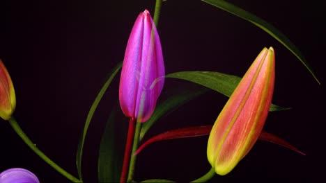 Pink-Flower-03
