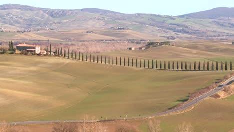 Un-Plano-General-De-Una-Finca-Con-Largas-Hileras-De-árboles-En-Toscana-Italia