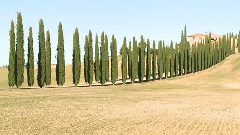 Un-Plano-General-De-Una-Casa-De-Campo-Con-Largas-Hileras-De-árboles-En-Toscana-Italia-4