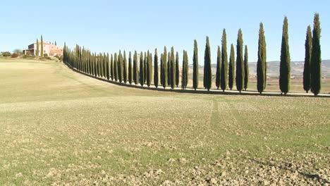 Un-Plano-General-De-Una-Finca-Con-Largas-Hileras-De-árboles-En-Toscana-Italia-5