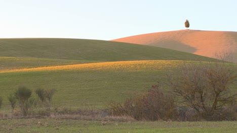 One-lonely-solitary-tree-stands-on-a-distant-hill-in-Tuscany-Italy-suggesting-independence