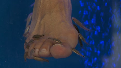 Fish-nibble-away-at-peoples-toes-and-feet-at-a-fish-spa-in-Greece-1