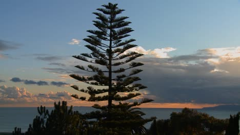 Gorgeous-clouds-behind-a-Norfolk-pine-and-the-ocean-along-Californias-central-coast