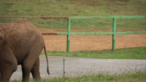 Elephant-103