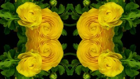 Yellow-Flower1