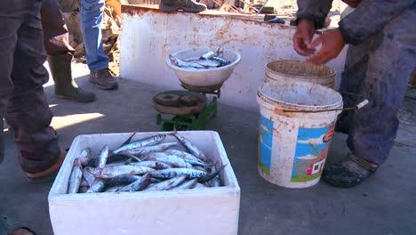 Fishermen-display-their-catch-in-Tyre-Lebanon