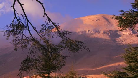A-cedar-branch-hangs-in-front-of-the-beautiful-mountains-of-Lebanon