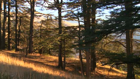 Golden-grasses-grow-in-front-of-the-beautiful-mountains-of-Lebanon-2