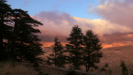 Clouds-move-across-the-mountains-with-cedar-trees-in-foreground-in-Lebanon