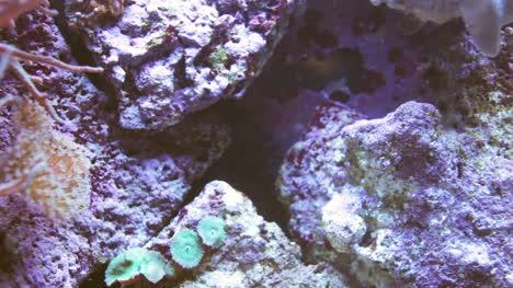 Aquarium-00