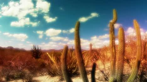 Baja-Desert-04