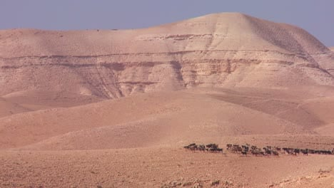 Sheep-and-goats-are-led-in-the-distance-by-a-Bedouin-shepherd-in-Israel-or-Jordan-1
