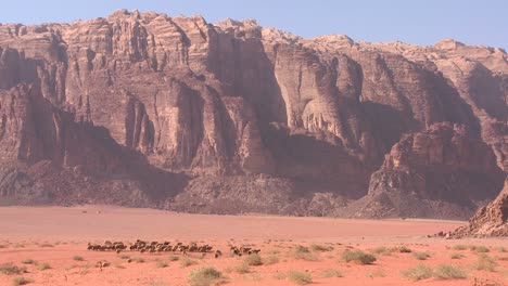 Sheep-and-goats-are-led-in-the-distance-by-a-Bedouin-shepherd-in-Wadi-Rum-Jordan-1