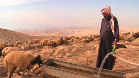 A-Bedouin-provides-precious-water-for-his-flocks-in-the-dry-desert-mountains-of-the-Holy-land