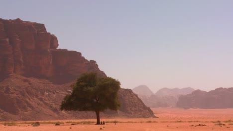 A-lone-tree-sits-in-the-Arabian-desert-at-Wadi-Rum-Jordan