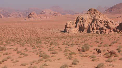 Camels-move-across-the-vast-desert-landscapes-of-Wadi-Rum-in-the-Saudi-deserts-of-Jordan