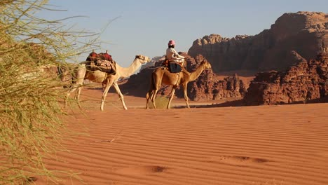 Camel-train-with-Bedouin-driver-moves-across-the-vast-desert-landscapes-of-Wadi-Rum-in-the-Saudi-deserts-of-Jordan-2