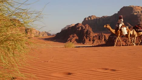 Camel-train-with-Bedouin-driver-moves-across-the-vast-desert-landscapes-of-Wadi-Rum-in-the-Saudi-deserts-of-Jordan-3