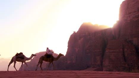 Un-Tren-De-Camellos-Cruza-El-Desierto-De-Arabia-En-Wadi-Rum-Jordan-2