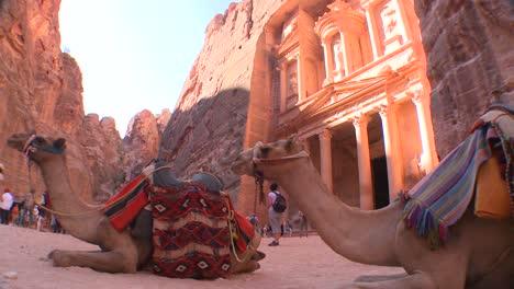 Los-Camellos-Se-Sientan-Frente-Al-Edificio-Del-Tesoro-En-Las-Antiguas-Ruinas-Nabateas-De-Petra-Jordania