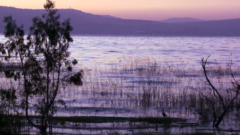 Beautiful-grasses-grow-in-the-Sea-Of-Galilee-in-the-glow-of-sunset-3