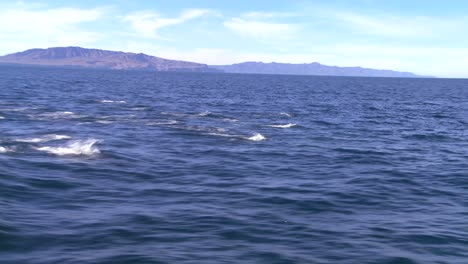 A-pod-of-dolphins-frolic-off-the-coast-of-Santa-Barbara-California-as-seen-from-a-boat-nearby