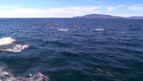 A-pod-of-dolphins-frolic-off-the-coast-of-Santa-Barbara-California-as-seen-from-a-boat-nearby-1