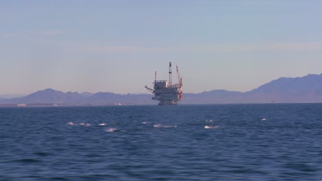 A-pod-of-dolphins-frolic-off-the-coast-of-Santa-Barbara-California-with-an-oil-platform-in-the-background