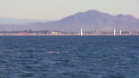 The-camera-zooms-in-as-a-whale-dives-and-splashes-with-its-tail-off-the-coast-of-Santa-Barbara-California