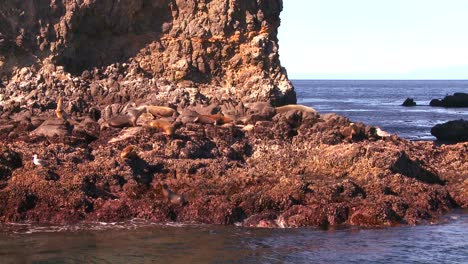 A-seal-rookery-in-Channel-Islands-National-Park-as-seen-from-a-boat-just-offshore