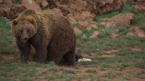 Bear-03
