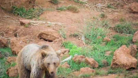 Bear-06