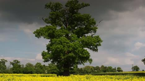 Hermoso-árbol-02
