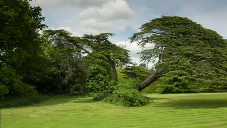 Beautiful-Tree-01