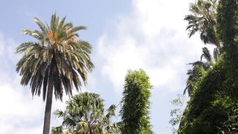 Botanic-Palms0