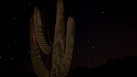 Cactus-Starlapse-2