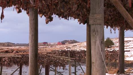Los-Peces-Se-Cuelgan-Para-Secar-En-Rejillas-De-Madera-En-Las-Islas-Lofoten-Noruega-1