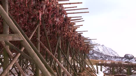 Fish-are-hung-out-to-dry-on-wooden-racks-in-the-Lofoten-Islands-Norway-2