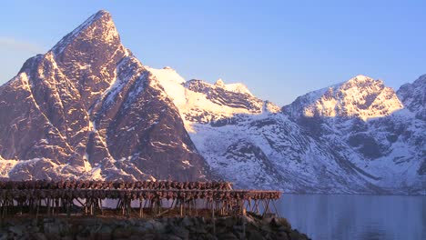 Fish-are-hung-out-to-dry-on-wooden-racks-in-the-Lofoten-Islands-Norway-3