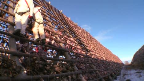 Los-Pescadores-Cuelgan-El-Pescado-Para-Secarlo-En-Bastidores-De-Madera-Piramidal-En-Las-Islas-Lofoten-Noruega-2