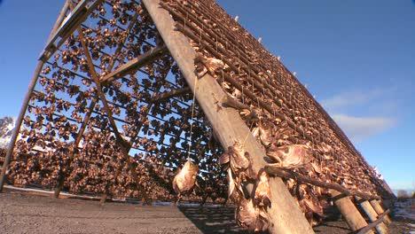 Los-Pescadores-Cuelgan-El-Pescado-A-Secar-En-Bastidores-De-Madera-Piramidales-En-Las-Islas-Lofoten-Noruega-3