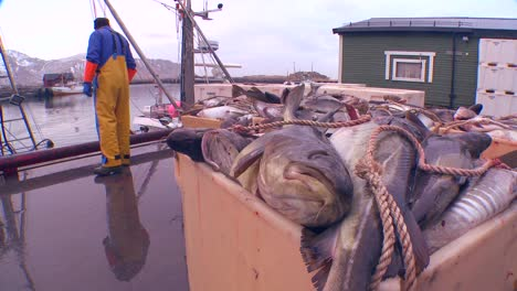 Shot-of-fishermen-unlading-trawlers-on-a-dock-in-Norway