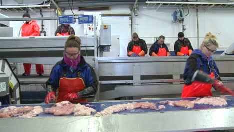 Women-work-on-an-assembly-line-at-a-fish-processing-factory-1